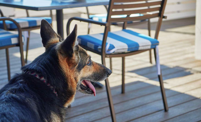 Furry guests at Berkeley Boathouse